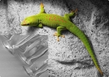 Gecko® Nanoplast® - with adhesive 31 - width 100mm - natural - 1m